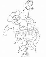 Coloring Pages Peony Flowers Peonies Drawing Hydrangea Outline Simple Flower Patterns Line Sketch Clusters Getdrawings Justpaintitblog Adult Template sketch template