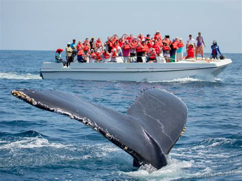 Where To Go Whale Watching In The Us  Business Insider