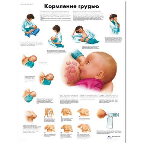 Breastfeeding Chart 1002319 Vr6557l Zvr6557l