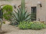 20+ Modern Desert Landscaping Plants Photos - Landscape Ideas