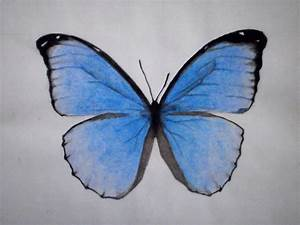 Blue Monarch Butterfly Drawing