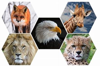 Animals Wild Animal Zoo Nature Wildlife Transparent