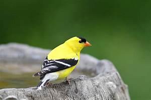 Birds Of Pennsylvania And Ohio  U2013 Website Of Doris Dumrauf