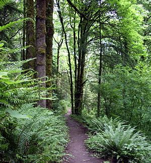 forest park conservancy clio