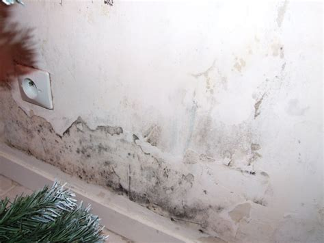 moisissure mur chambre anti moisissure mur gallery of trace humidit mur with