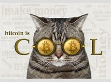 Cats Went Crypto First, Now It's Time for Consumers CoinDesk