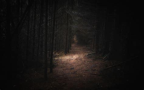 dark forest landscape wallpaper     imgnoozcom