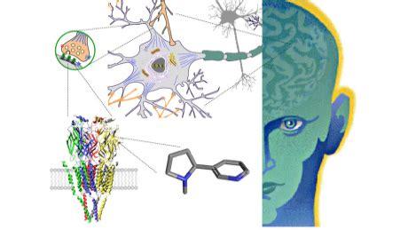 drugs   brain  coursera