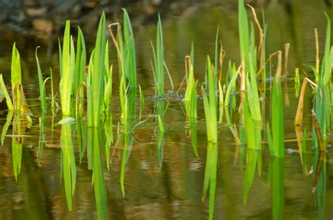 water plants water plant free stock photo public domain pictures