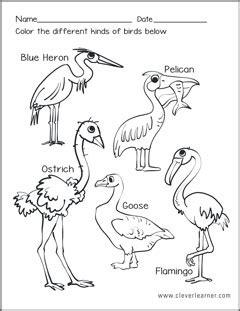 Kinds of birds worksheets for preschools