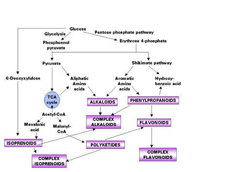 plant biotech introduction  plant secondary metabolites