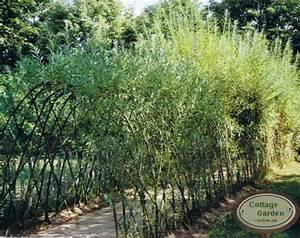 Weidenruten Zum Pflanzen Kaufen : 50x weide 100 150 tolle starke pflanzen zum bauen mit ~ Lizthompson.info Haus und Dekorationen