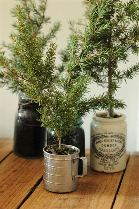 christmas tree cuttings bright bold and beautiful blog