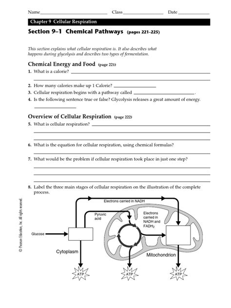 Biology Lesson 91 Worksheet  Cellular Respiration Fermentation