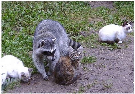 massachusetts officials issue rabies alert   rabid