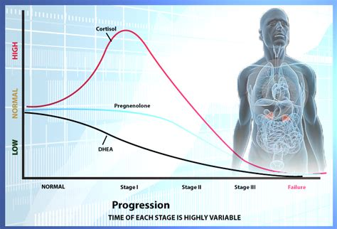 key phases  adrenal fatigue drjockerscom