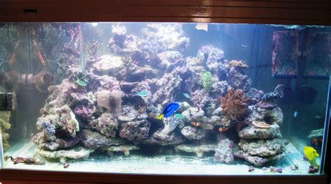 photo d 233 coration aquarium eau de mer