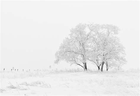 Tree, Nature, Branch, Snow, Black And White, Sky, Fog, Mist, Frost, Weather
