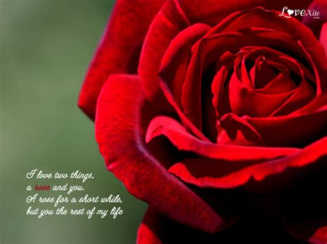 Romantic Love Wallpapers With Quotes Quotesgram