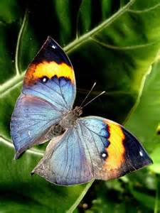 Love Colorful Butterflies