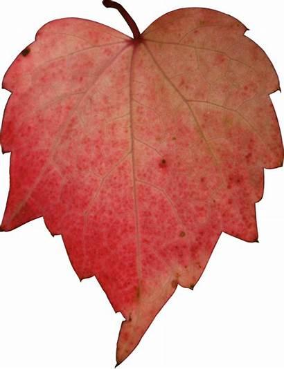 Leave Heart Autumn Deviantart