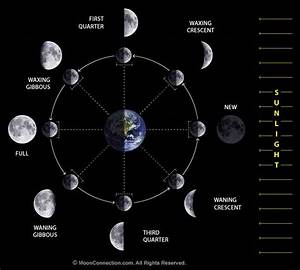Science Doing  Astronomical Bodies  Moon Phases