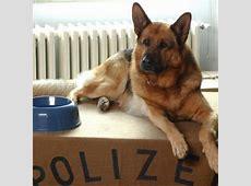 Schaffhausen Polizeihund verhaftet Sprayer in Schaffhausen