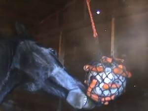 DIY Horse Stall Toy - petdiys com