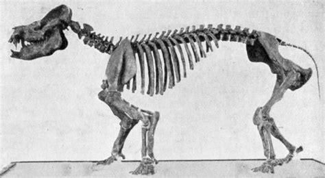 coryphodon wikipedia