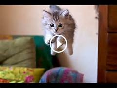 Funny Cats Videos Ever...