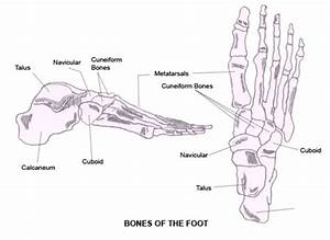 Printable Diagrams Of The Foot