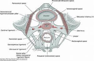 Uterosacral Ligament | www.pixshark.com - Images Galleries ...