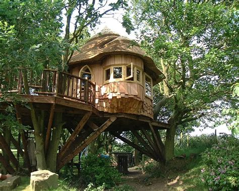pretty tree houses just for fun sharing and knowledge enjoy a thrilling stay at some beautiful tree