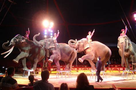 time  joined  circus  jj howard review