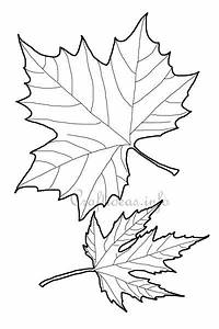 Fall Craft Templates - Maple Leaf Shapes
