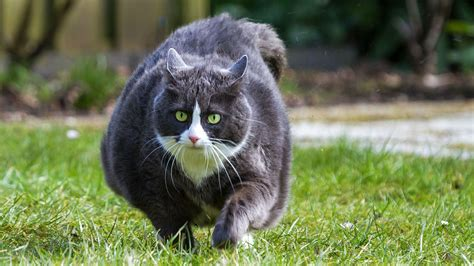 Pet Obesity is Causing Big Health Problems According to a