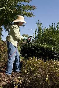 Face Designs Gardening Free Stock Photo A Woman Doing Yardwork