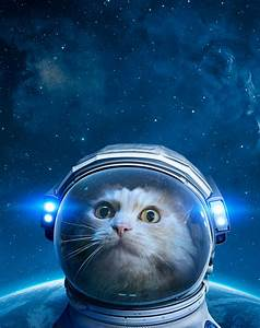 O2online De Go To Rechnung : my god it 39 s full of cats the very best artwork of cats in space ~ Themetempest.com Abrechnung