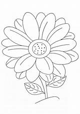 Flower Daisy Coloring Pages Flowers Printable Sheet Sheets Gerber Activities Colouring Crafts Turtlediary Sunflower Drawing Daisies Outline Cookie Roses Bouquet sketch template