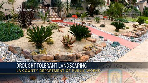 drought tolerant landscapes california s drought tolerant landscaping may make heat waves worse watts up with that