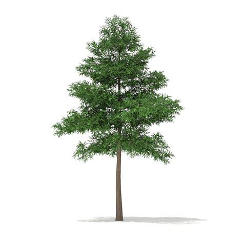 decorations for a kitchen scots pine tree pinus sylvestris 9 4m
