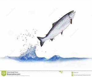Jumping Out From Water Salmon Stock Image - Image: 10875721