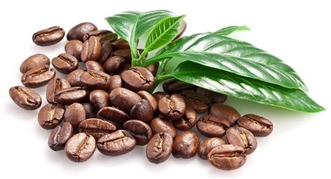 The Difference Between Arabica And Robusta Benefits Of Coffee Scrub For Cellulite Starbucks Bottled Iced Ingredients Roasted Luwak Drinking Expired Menu Ketogenic Rubbing On Skin
