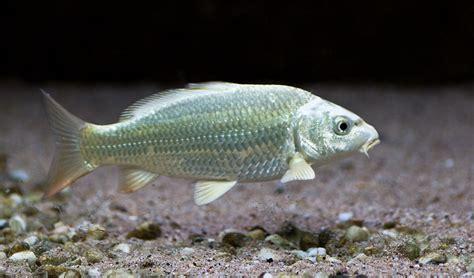 Koi Goldfische Graskarpfen Fische Fuer Den Gartenteich by Die Fische Kaltwasser Aquarium