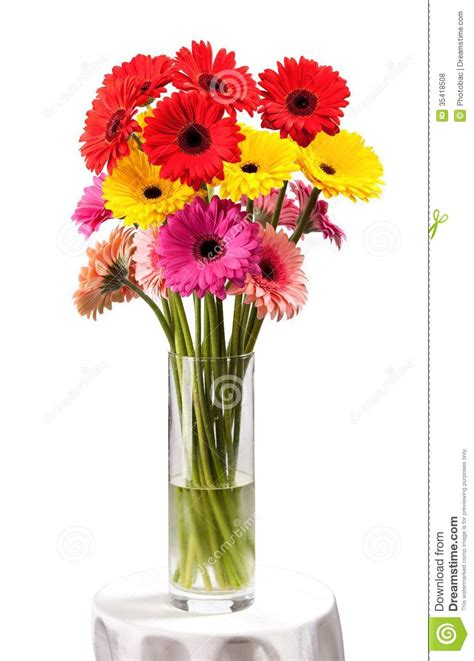 flowers in a vase gerbera flowers in vase isolated white stock photo
