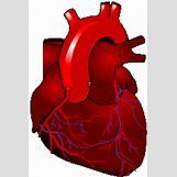 Anime Heart Gif | 159 x 238 animatedgif 24kB