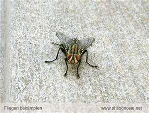 Fliegen Fernhalten Balkon : fliegenplage fliegen aus dem haus vertreiben philognosie ~ Whattoseeinmadrid.com Haus und Dekorationen