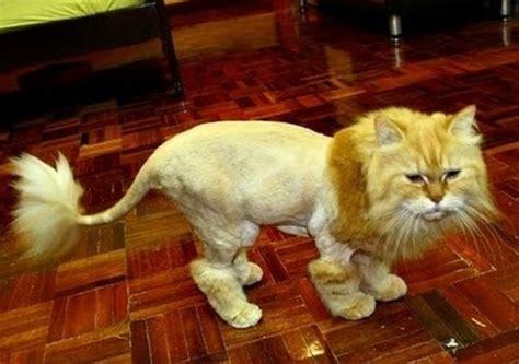 cats   hate  stupid haircuts