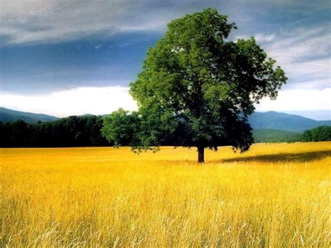 wallpaper pemandangan alam indah gambar foto wallpaper