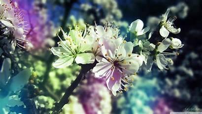 Spring Colorful Wallpapers Widescreen Desktop 4k Background